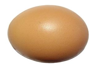 Egg_on_white_background